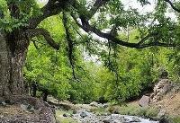 هفتهای دو ساعت در طبیعت سپری کنید