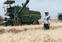 ممنوعیت خروج گندم از آذربایجان شرقی