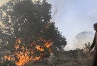 شعلههای آتش؛ بلای جان مزارع ایلام