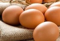 افزایش ریسک بیماری های قلبی با مصرف روزانه بیش از دو تخم مرغ