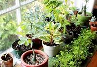 گیاهان زیبا اما خطرناک
