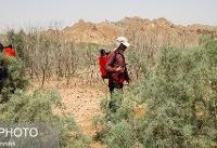 سخنگوی کمیسیون کشاورزی: کمیسیون با جدیت به دنبال مهار ملخهاست