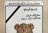 دستگیری دومین ضارب توله خرس سوادکوه