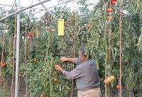 توسعه مجتمع گلخانهای امانآباد