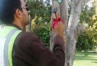 درختان سرعین را شناسنامهدار کنید