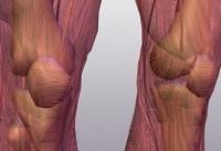 خستگی عضلانی از مهمترین عوامل اختلال و کاهش عملکرد ورزشی