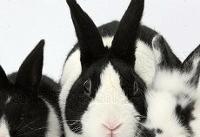 نابودی زندگی خرگوشهای سراوان به دلیل انباشت پسماند
