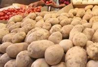 وعده سازمان حمایت برای کاهش قیمت سیبزمینی تا ۱۵ روز دیگر