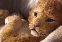 «شیر شاه» سلطان باکسآفیس شد/ سهم ۱۴ میلیون دلاری «اسباببازیها»