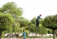 یک حقیقت عجیب: درختان عامل تشدید آلودگی هوا در محیطهای شهری