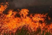 وقوع صدها مورد آتشسوزی جدید در جنگل آمازون
