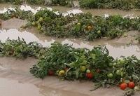 سیل ۱۳ هزار و ۷۰۰ میلیارد به بخش کشاورزی کشور خسارت زد