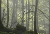 درخت ۵ میلیاردی با ۱۰ میلیون تومان جریمه!