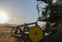تولید ۱۴۴۰۰ کیلوگرم گندم در هکتار/کشاورز کردستانی رکورد زد