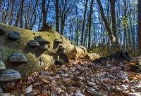 فاجعه بزرگبرای جنگلهای آلمان