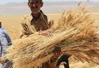 واکنش وزارت کشاورزی به خبر