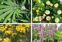 ۱۱۳ نفر متقاضی کشت گیاهان دارویی در اراضی شیبدار