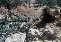 عوامل قطع درختان بومی در پارک ملی دز دستگیر شدند
