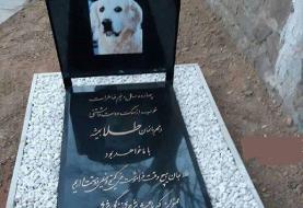 دستگیری زنی که سگش را در مسجد دفن کرده بود توسط سپاه