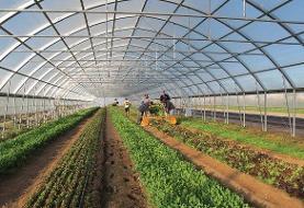 طرحهای کشاورزی سازگار با کمآبی در استان بوشهر گسترش مییابد