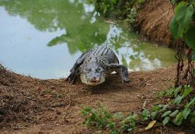 Philippine boy eaten by croc in latest attack