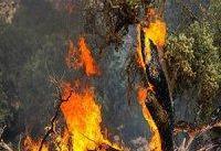 نیمی از جنگل&#۸۲۰۴;های شمال دود شده است!