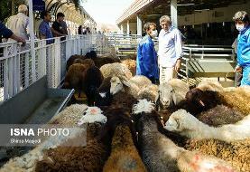 تهرانیها چند میلیارد ریال نذر قربانیهای عید قربان کردند؟