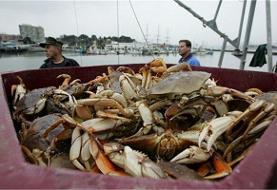 خرچنگ و سفره ماهیهای بوشهر صادر میشوند