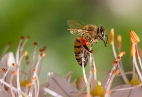 کالاهای اقتصادی مهمی که حشرات تولید میکنند