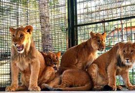 مدیرکل حفاظت محیط زیست: باغ وحش ۶۰ ساله مشهد مجوز ندارد