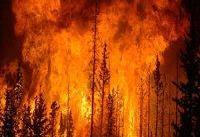 آتشسوزی در ۱۱ هزار هکتار جنگل در ۲ ماه تابستان