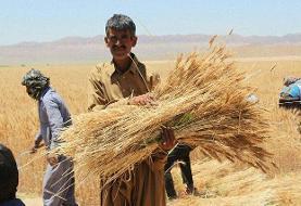 نیاز به ۳۶ هزار پهپاد در بخش کشاورزی کشور