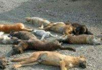 شهرداری کهریزک آزار سگهای ولگرد را تکذیب کرد