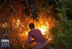 ویدئو / آتشی که به جان جنگلها و مراتع کشور افتاد