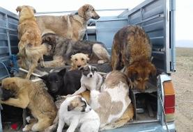 واکنش هنرمندان از نوید محمدزاده تا هانیه توسلی به سگکشی