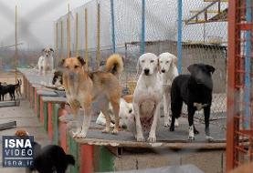 رفع نواقص نقاهتگاه سگهای بدون صاحب کهریزک تا ۱۰ روز دیگر