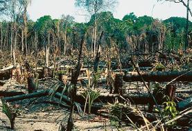 آمازون و در آتش رهبران برزیل و فرانسه در جنگ! مکرون: خانهمان به معنی واقعی کلمه دارد میسوزد