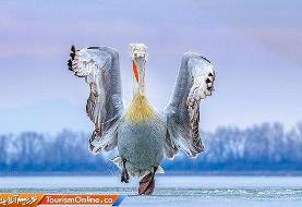تصاویر | خاصترن عکسهای ثبتشده از پرندگان در سال گذشته