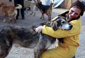 سگکشی در ایران، با سگهای ولگرد چه کنیم؟