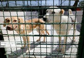 شهرداری تهران: نقاهتگاه سگ ها در کهریزک تا اطلاع ثانوی واگذار نمی شود