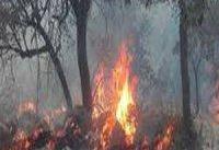 وقوع حریق در جنگلهای ارسباران/ هیچ دستگاهی به ما بالگرد نمی دهد