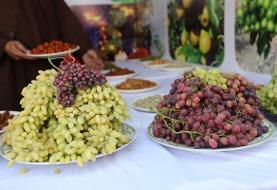 [عکس]جشنواره انگور در هرات؛ این ولایت بیش از ۱۰۰ نوع انگور دارد