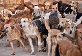 افشاگر سگکشی در کهریزک تشویق شود نه بازداشت
