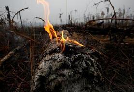 ارتش برزیل برای خاموش کردن آتش جنگلهای آمازون نیرو ارسال میکند