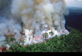 نقش جنگلهای آمازون در زنده ماندن زمین چقدر است؟