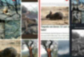 محیط زیست: تصاویر لاشه حیوانات سوخته مربوط به آتش سوزی ارسباران نیست