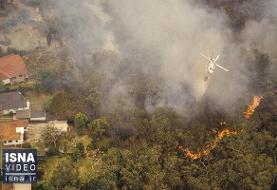 ویدئو / تهدید جدی بیخ گوش بزرگترین جنگل بارانی دنیا