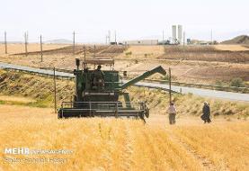 خرید گندم توسط تعاون روستایی از مرز ۲.۵ میلیون تن گذشت