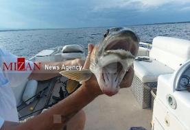 یک ماهی عجیب با ۲ دهان در تور بانوی صیاد! +عکس