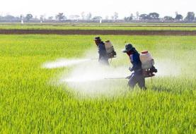 مصرف بیرویه سموم؛ آفت کشاورزی گلستان